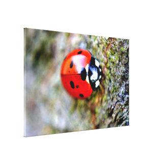 Ladybug Crawling on Tree Trunk Canvas Prints
