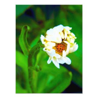 Ladybug & Daisy Photography Photo Print