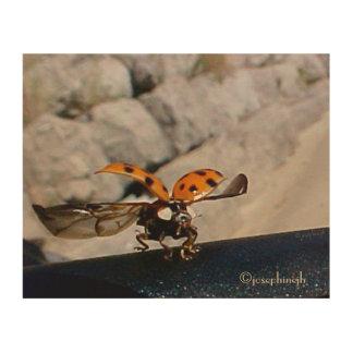 "LadyBug ""Flight"" jjhelene Wood Wall Art Wood Prints"