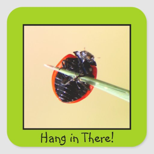 Ladybug Hang In There Square Stickers