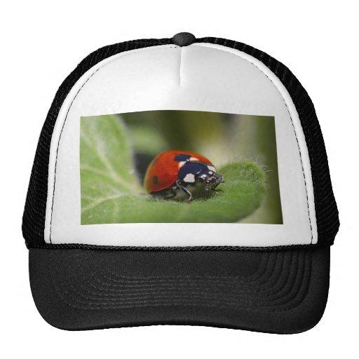 Ladybug Mesh Hat