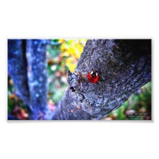 Ladybug in a Cherry Tree 1 Photo Print