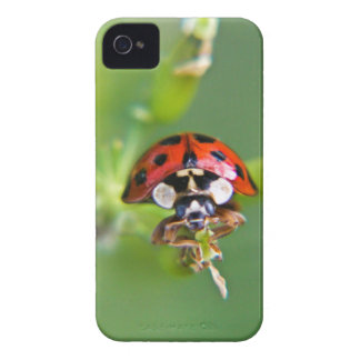 Ladybug in close up Case-Mate iPhone 4 cases