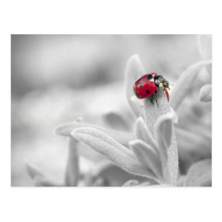 Ladybug in the white card postcard
