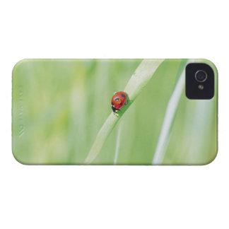 Ladybug iPhone 4 Case-Mate Case