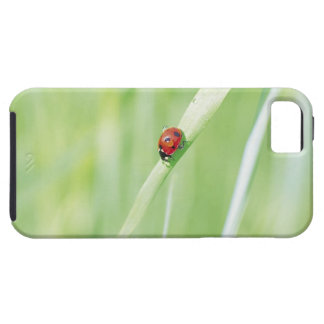 Ladybug iPhone 5 Cover