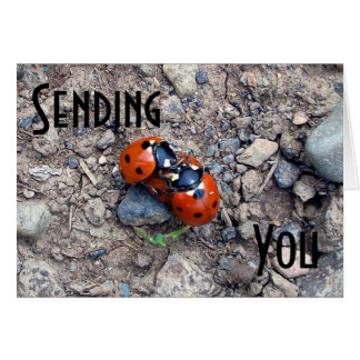 Ladybug Kisses Card