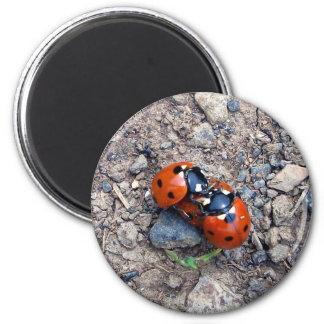 Ladybug Kisses Magnet