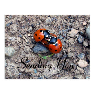 Ladybug Kisses Postcard