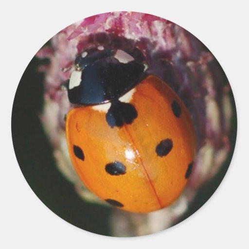 Ladybug - Lady Beetles stickers