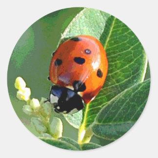 Ladybug, Ladybug Round Sticker