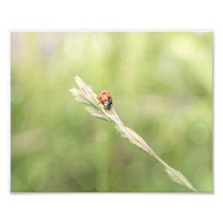 Ladybug Ladybug Where Did You Go Photo Print