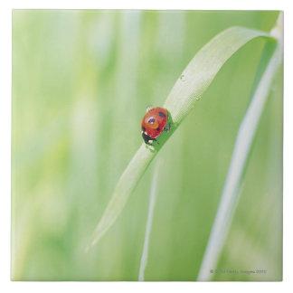 Ladybug Large Square Tile
