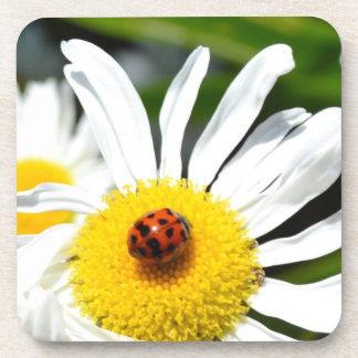 Ladybug Live Your Dreams Coaster Set