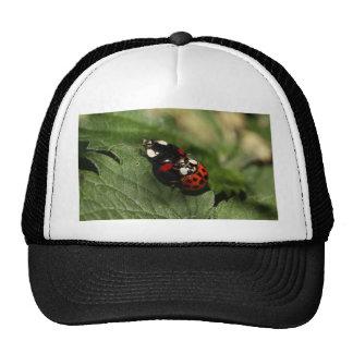 Ladybug Love Mesh Hat