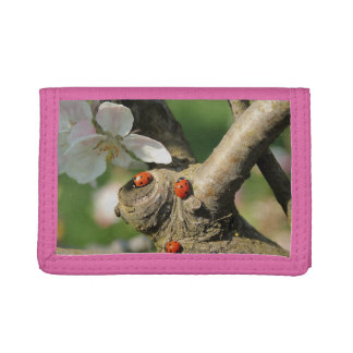 Ladybug Luck Custom Personalize Anniversaries Trifold Wallets