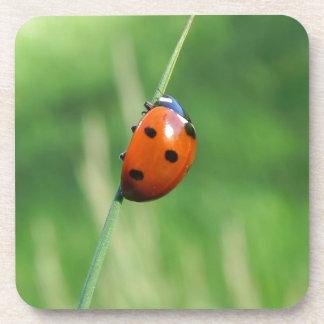 Ladybug on a blade of grass coaster