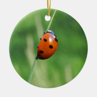 Ladybug on a blade of grass christmas tree ornaments