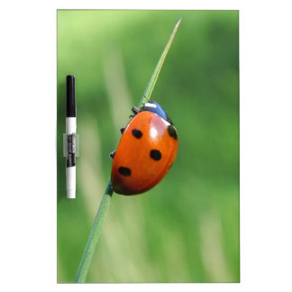 Ladybug on a blade of grass Dry-Erase boards
