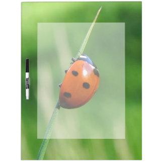 Ladybug on a blade of grass dry erase whiteboard