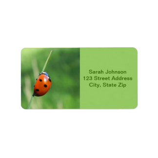 Ladybug on a blade of grass  Labels