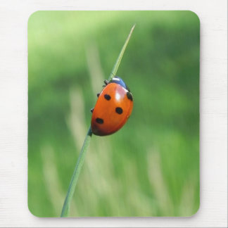 Ladybug on a blade of grass Mousepads