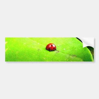 Ladybug on a Catalpa Tree Leaf Bumper Sticker