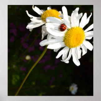 Ladybug on a Daisy Poster