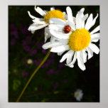 Ladybug on a Daisy Print