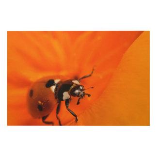 Ladybug on a poppy wood wall art