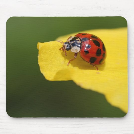 Ladybug On A Yellow Leaf Mouse Pad