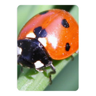 Ladybug on Blade of Grass 13 Cm X 18 Cm Invitation Card
