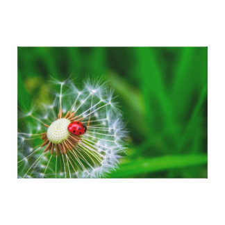 Ladybug on Dandelion clock Canvas Print