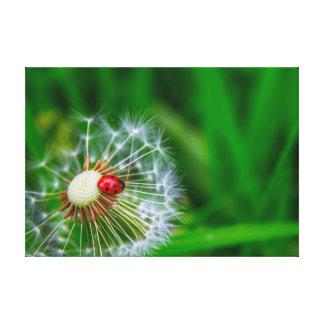 Ladybug on Dandelion clock Stretched Canvas Prints