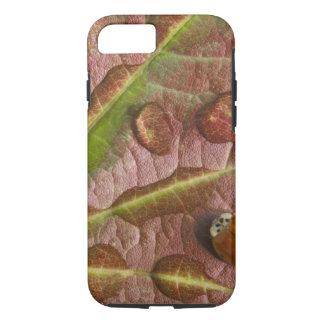 Ladybug on dewy maple leaf. Credit as: Don iPhone 8/7 Case