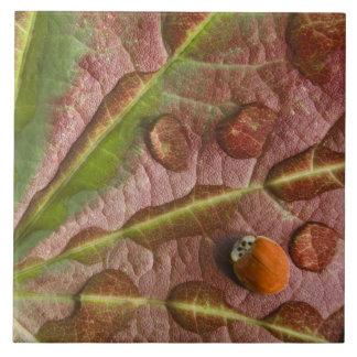 Ladybug on dewy maple leaf. Credit as: Don Large Square Tile