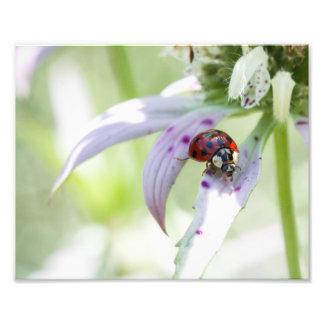 Ladybug on Flower Photographic Print