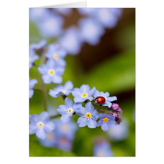 Ladybug on Forget-me-not Blank Greeting Card