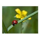 Ladybug on Grass close up