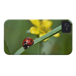 Ladybug on Grass close up iPhone 4 Case