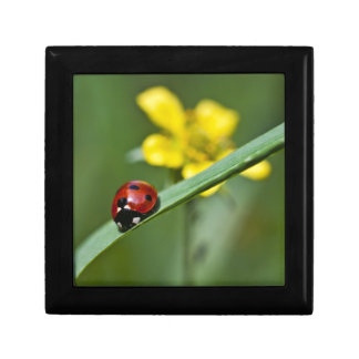 Ladybug on Grass close up Small Square Gift Box