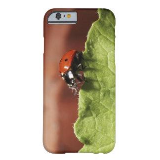 Ladybug on lettuce leaf (MR) Barely There iPhone 6 Case