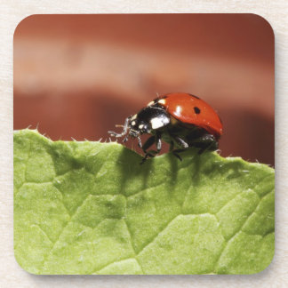 Ladybug on lettuce leaf (MR) Coaster