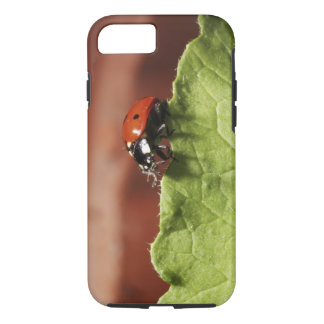 Ladybug on lettuce leaf (MR) iPhone 8/7 Case