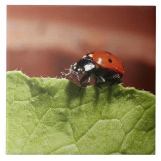 Ladybug on lettuce leaf (MR) Large Square Tile