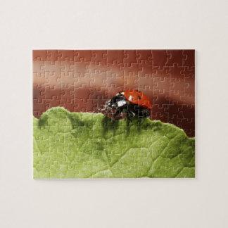 Ladybug on lettuce leaf (MR) Puzzles
