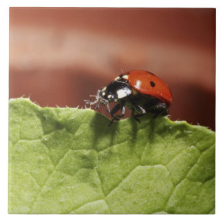 Ladybug on lettuce leaf (MR) Tile