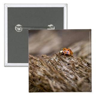 Ladybug on old wood, Apalachicola Bluffs and 15 Cm Square Badge
