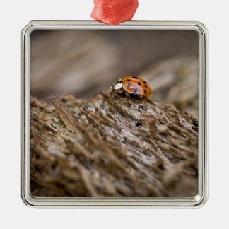 Ladybug on old wood, Apalachicola Bluffs and Christmas Ornament