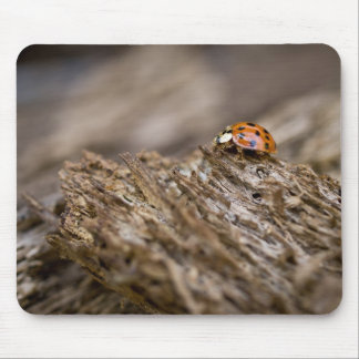 Ladybug on old wood, Apalachicola Bluffs and Mouse Mat